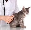Ветеринарные клиники в Серафимовиче